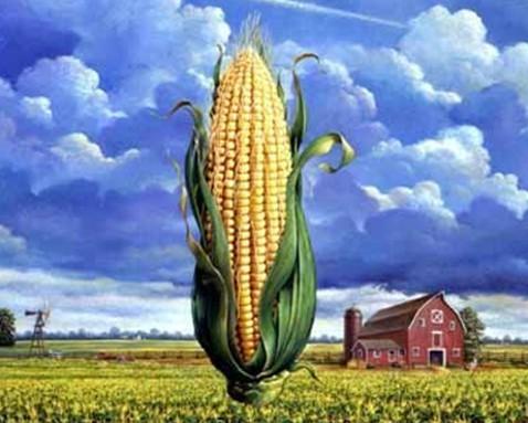 转基因食品有哪些?怎么鉴别转基因食品?