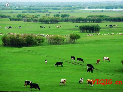 这春天的草原啊 好清新!