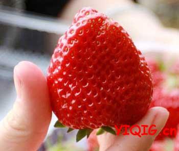 什么样的草莓是甜的?