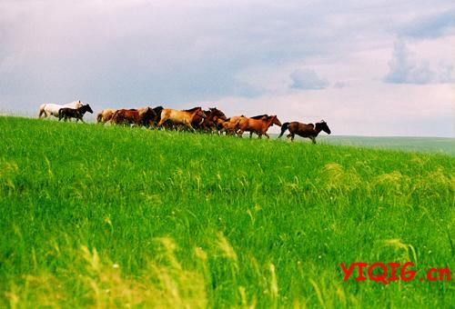 暑期最值得去的草原--乌拉盖草原