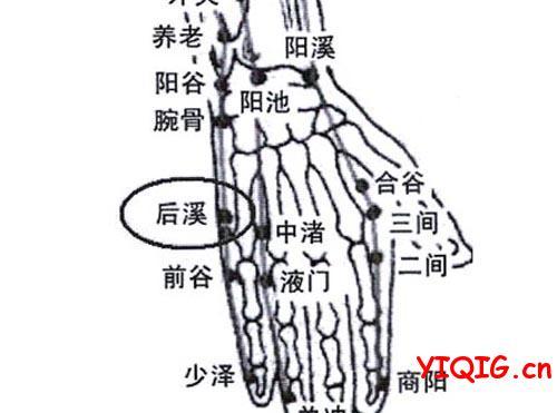 手指上的敏感处 手指防病穴位图