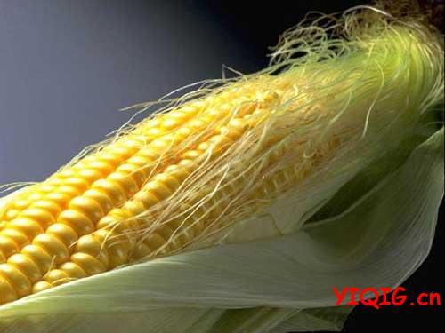 玉米须的药用功能和服用方法