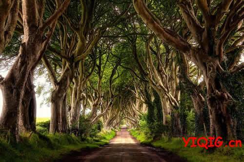 堪比仙境的树海美色