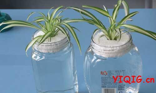 容易养活又好管理的水培植物