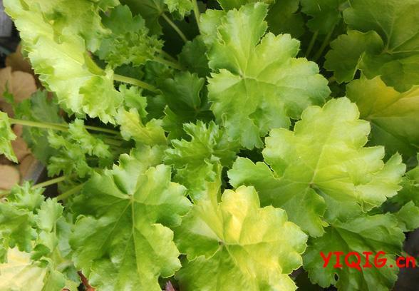 耐阴又好养的室内植物有哪些