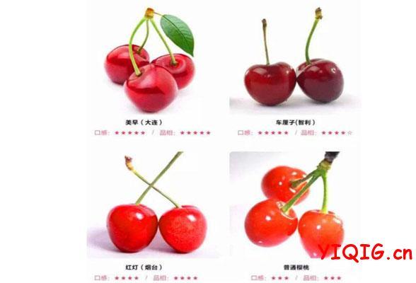 最全挑选车厘子(进口樱桃)的窍门,首席水果礼物